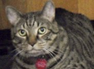 Titanic, the Sacramento Animal Care Services Mascot (sacbee.com)