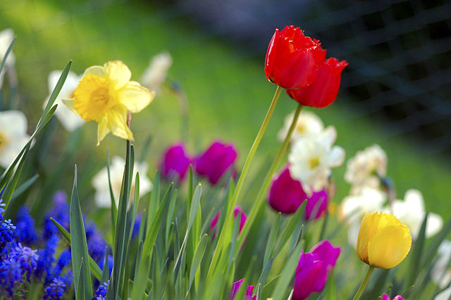 Colorful Spring Garden Photo:Anita Martinz(Flickr)