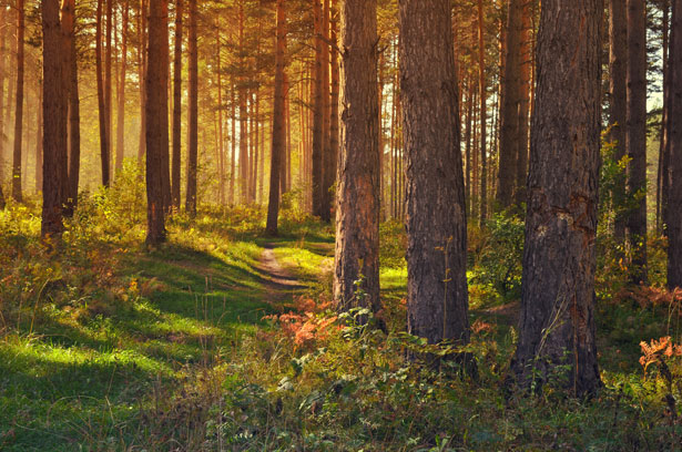 September In The Forest Larisa Koshkina (publicdomainpictures.net)